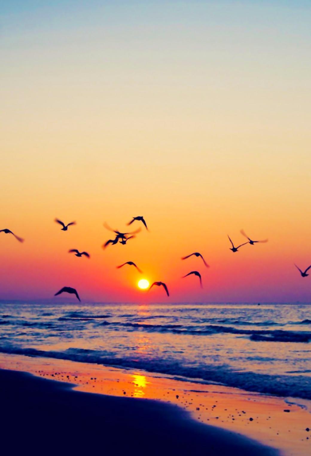 海と夕日とカモメ 39 Iphone壁紙 すべて1136 X 640pxサイズ
